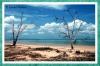 Beach Sentinals - Aqua