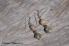 Ocean Jasper Earrings - Sage Green
