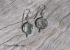 Paua Coin Earrings