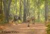 Banteng on their morning stroll