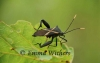 Crusader Bug