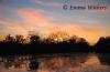 Billabong Sunset