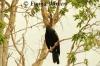 Darter in Tree