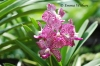 Pink Puzzle Orchids