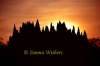 Termite Sunset